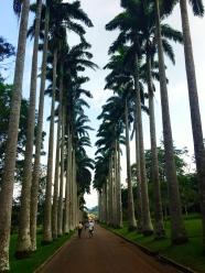 pic taken by me at Aburi Botanical Garden