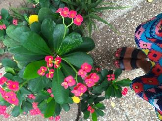 My aunts flowers